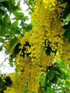 Tropical Flowering