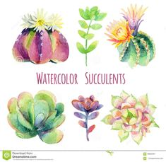Illustration about Watercolor succulents set. Illustration of botany, prickly, cacti - 58902361 Watercolor Sketch, Watercolor Illustration, Watercolor Paintings, Hand Illustration, Watercolors, Succulents Drawing, Watercolor Succulents, Cactus Stickers, Decoupage