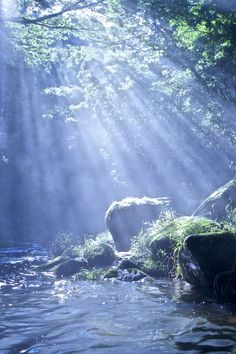 Komorebi (Ray of Sunshine), Japan, by Yusuke Hirashima, on 500px.