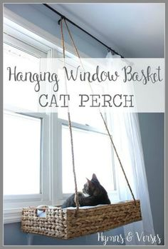 Hanging window basket cat perch.