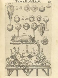 """Page 118 of Juan Valverde de Amusco's Anatomia del corpo humano, 1560 featuring various images of the eye, a swine that is ready to be dissected and the various instruments that would be used to do the dissection."""" From the collection of the National Library of Medicine. Visit: http://www.nlm.nih.gov/exhibition/historicalanatomies/valverde_home.html"""