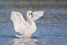 For Your Critique: Image #7 « Arthur Morris/BIRDS AS ART