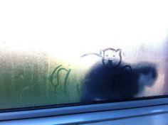 drawing around the cat