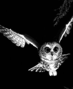 Love this Black and White owl!