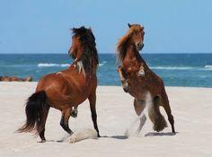 beautiful-horses-01.jpg (400×298)