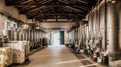 A Villa di Corlo: Lambrusco e fotovoltaico   Lambrusco Valley