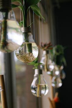 Lovely idea. #Bamboo in upside down #lightbulbs.