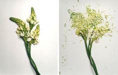 Dana Garden Design: JON SHIREMAN'S BROKEN FLOWERS