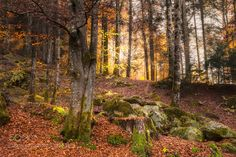 Where have the colors gone...? by franzengels. @go4fotos