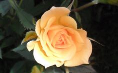 "Caminos del viento: ""Bread and roses"". Ángel Oliva."