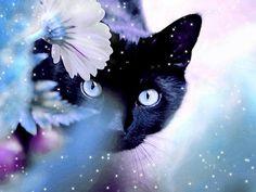 красивые Картинки, рисунки Кошки, коты с бесплатными html кодами