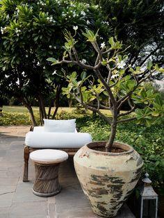 Fashion Me Now, Secret Escapes, Jaipur, Swimming Pools, Outdoor Living, Road Trip, Exterior, Garden, Plants