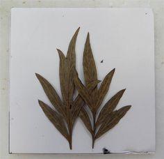 Las hojas de Paula
