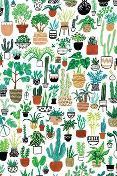 ~ Cactus Club ~
