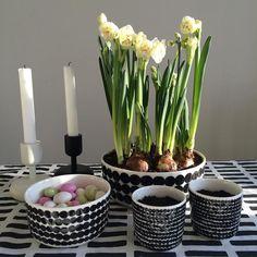 S P R I N G  #spring #sunnyday #marimekko #narsissi #pääsiäisruoho #candy #iittala #artek #maaliskuu by lillinkukkis