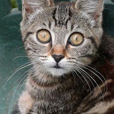 cats - Chat 1 (c)h) by Olao-Olavia / Okaio Créations  by fz 1000 2014