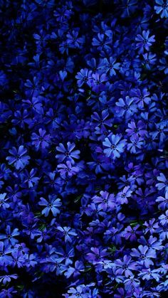 little blue flowers, floral phone wallpaper, phone background, spring images Flor Iphone Wallpaper, Frühling Wallpaper, Spring Wallpaper, Iphone Background Wallpaper, Aesthetic Iphone Wallpaper, Nature Wallpaper, Aesthetic Wallpapers, Landscape Wallpaper, Animal Wallpaper