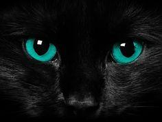 Katze, favim.com #Schwarz #Katze #Black #Cat #green #eyes