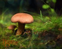 Mushrooms - original photograph by Tammie Bowden