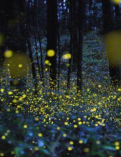 Tsuneaki Hiramatsu, Combined slow–shutter speed photos to produce stunning images of firefly signals in Japan.© Tsuneaki Hiramatsu, digitalphoto.cocolog-nifty.com.