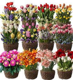 Twelve Months of Flower Bulb Gift Gardens - Ships Each Month December 2016-November 2017 | Flowers - if you're looking for a wow gift, this is it. Give them floral gift gardens and they'll enjoy beautiful blooming flowers all year long.