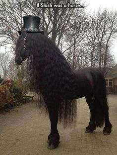 (Friesian horses are exhibited with loooooooong manes and tails, but other breeds can grow manes and tails very long, too. All The Pretty Horses, Beautiful Horses, Animals Beautiful, Stunningly Beautiful, Beautiful Cats, Horse Pictures, Animal Pictures, Funny Animals, Cute Animals
