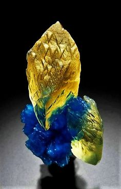 Calcite with Cavansite from Wagholi, Pune District, Maharashtra, India Credit: Kristall Minerals Minerals And Gemstones, Rocks And Minerals, Beautiful Rocks, Mineral Stone, Rocks And Gems, Stones And Crystals, Gem Stones, Earth, Yellow Calcite