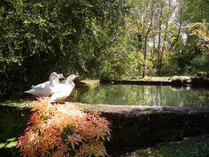 Pozo centenario de Casa Grande de Fuentemayor     #opinion #opiniones #bodas #galicia  #pazo #encanto #casa #rural #turismo #rural #boda #civiles #jardin #eventos #celebraciones #banquetes