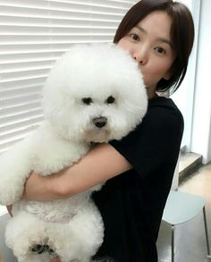 Song Hye-kyo's daily life with her companion dog @ HanCinema :: The Korean Movie and Drama Database for likes korean movie Song Hye-kyo's daily life with her companion dog Song Hye Kyo, Song Joong Ki, Gentleman Songs, Autumn In My Heart, G Song, Songsong Couple, Yoo Ah In, Companion Dog, Korean Star