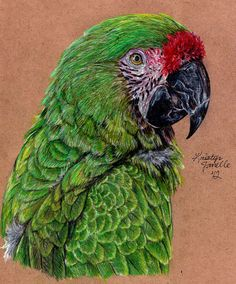 Military Macaw by KristynJanelle.deviantart.com