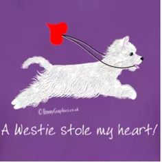 Yes, that was you , Sophie June ! Westie Puppies, Chihuahua Dogs, Westies, Pet Dogs, Dogs And Puppies, Dog Cat, Dog Love, Puppy Love, West Highland Terrier
