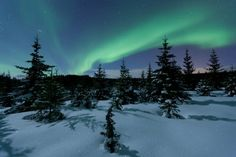 Image result for arctic forest Arctic, Northern Lights, Winter, Nature, Travel, Image, Winter Time, Naturaleza, Viajes