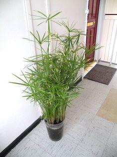 24 Belles Plantes Qui Poussent Même à l'Ombre !