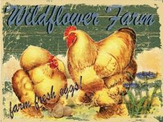 Amazon.com - Wildflower Farms Fresh Eggs Metal Sign, Rustic ...