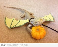 AGgg I want one soo bad! I would name him toothless and he would be my own pet dragon haha