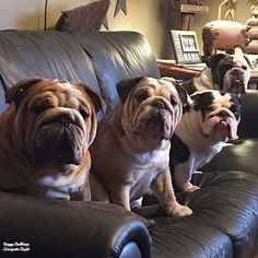 ♥ Baggy Bulldogs ♥ This will be our house someday... with Jake in the middle!!