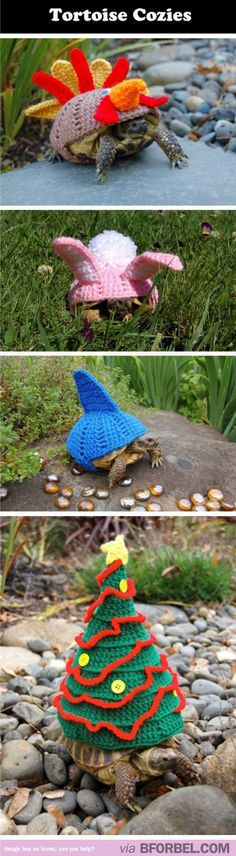 Because Tortoises Get Cold Too…