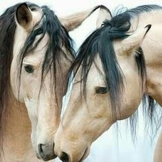 Is a beautiful horses i love All The Pretty Horses, Beautiful Horses, Animals Beautiful, Cute Animals, Horse Photos, Horse Pictures, Animal Pictures, Cute Horses, Horse Love