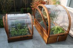 Gardeners turn to mini greenhouse gardening when they need to create a specific microclimate or lack space for a larger. the Mini greenhouse can be used for protected crops such as tomatoes, peppers, cucumbers and aubergines. Small Greenhouse Kits, Diy Greenhouse Plans, Backyard Greenhouse, Greenhouse Wedding, Pallet Greenhouse, Cheap Greenhouse, Portable Greenhouse, Greenhouse Film, Underground Greenhouse