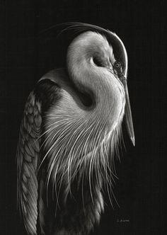 Lori Dunn Scratchboard Art - so detailed! Art Scratchboard, Beautiful Birds, Animals Beautiful, Animal Drawings, Art Drawings, Vogel Illustration, Black Paper Drawing, Scratch Art, Wildlife Art