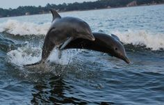 Love the dolphin cruises at Cold MIL Fleet!