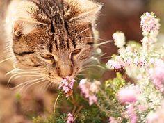Katze, Makrele, Natur, Haustier