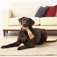 8 Fun Games for Dogs Coming up with dog games can be tricky, but there are tons of stimulating activities for your pet that don't involve catching a Frisbee. Put your plans to play fetch on hold -- we've got eight exciting dog games for you and y