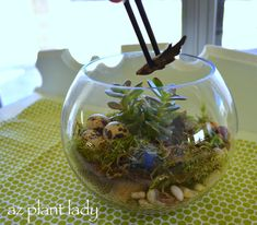 No room for a garden? Want to keep a piece of the outdoors on your dining room table or desk? Learn how to make a terrarium in a few easy steps.