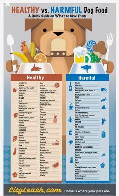 Healthy vs Harmful Dog Food