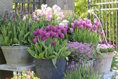 Gorgeous potted spring bulbs. Something to look forward to!