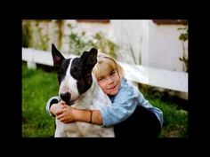 English Bull terriers from germany English Bull Terriers, Boston Terrier, Germany, Videos, Dogs, Youtube, Animals, Photo Illustration, Animales