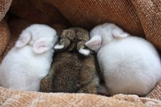 one, two, three little bunny rabbits