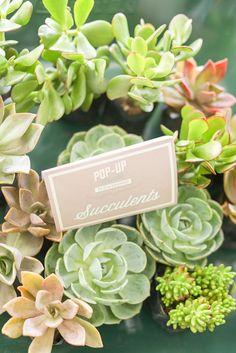 Succulents from a Vintage Hipster Pop Up Flower Shop Party via Kara's Party Ideas | KarasPartyIdeas.com (22)
