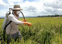 Pesticide harms are global — & often invisible   Pesticide Action Network   www.panna.org/blog/pesticide-harms-are-global-—-often-invisible